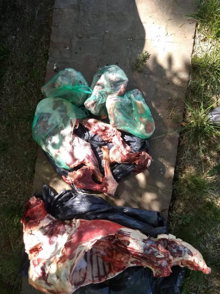 Dos suarenses fueron imputados de los delitos de abigeato agravado y robo