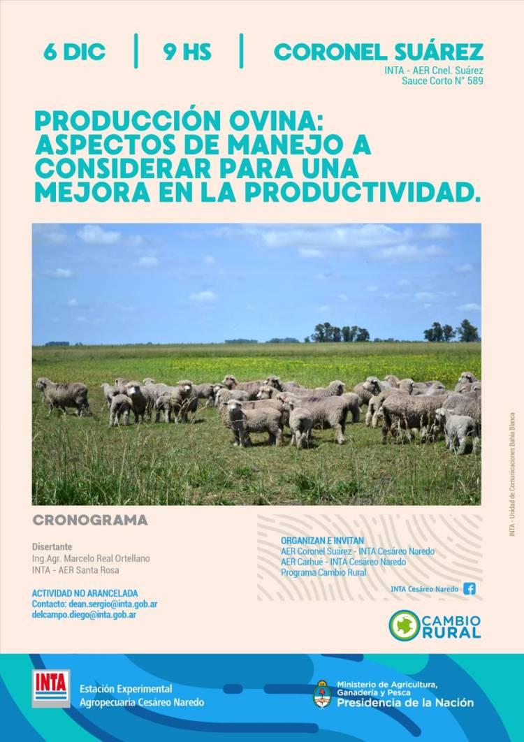 Producción ovina. Jornada técnica este viernes en el INTA