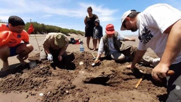 Monte Hermoso: una familia de Coronel Suárez halló restos fósiles que podrían tener entre 10 y 25 mil años