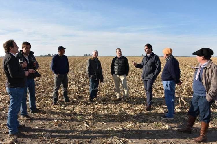 Buenos Aires: la superficie sembrada de trigo creció un 18,8%