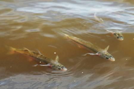 Comienza la veda de pesca de pejerrey en la provincia de Buenos Aires