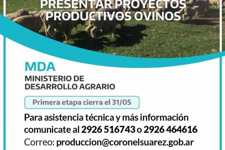 Productores Ovinos: Convocatoria para presentar Proyectos Productivos
