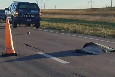 Murió arrollado por un patrullero cerca del ingreso a Tornquist