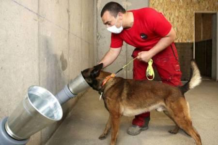 La UBA comienza a entrenar perros para detección de COVID-19