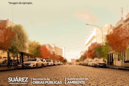 Reforestación de calle Mitre: un proyecto que busca recuperar el arbolado urbano