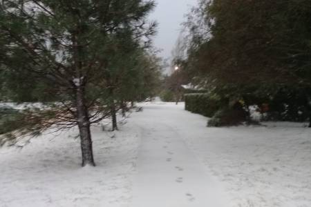 Hubo nevadas en la madrugada de hoy en Villa Ventana y alrededores