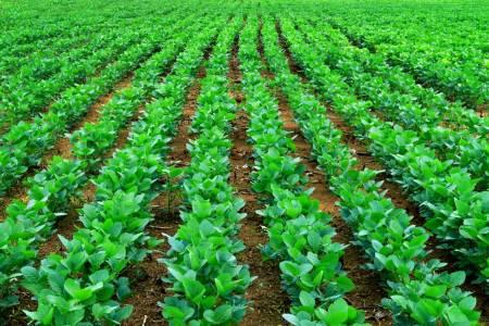 Nutrien Ag Solutions acompaña el lanzamiento de la soja Enlist E3 de STINE
