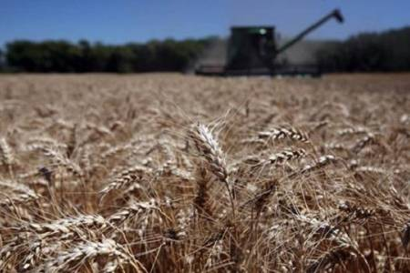 La caída de AFIP paraliza el mercado de granos en plena cosecha