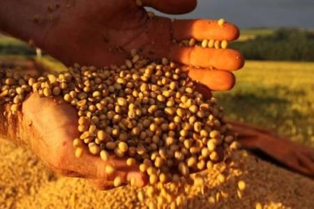 """Un """"descuido"""" del Gobierno provocó una pérdida millonaria: no cerró el registro de exportación de granos antes de anunciar cambios en retenciones"""