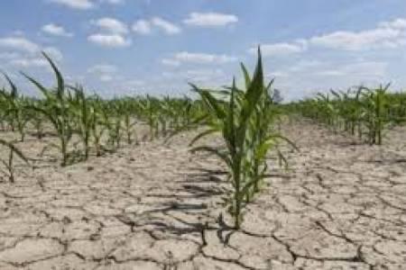La Provincia declara hoy la emergencia agropecuaria en más de 20 distritos