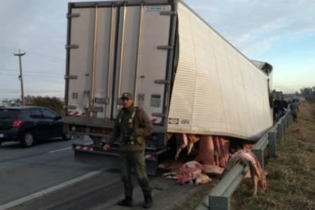 Santa Fe: se rompió un camión en la ruta y se llevaron los cerdos