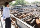 La hacienda subió un 20% en Liniers y ya se traslada al precio de la carne