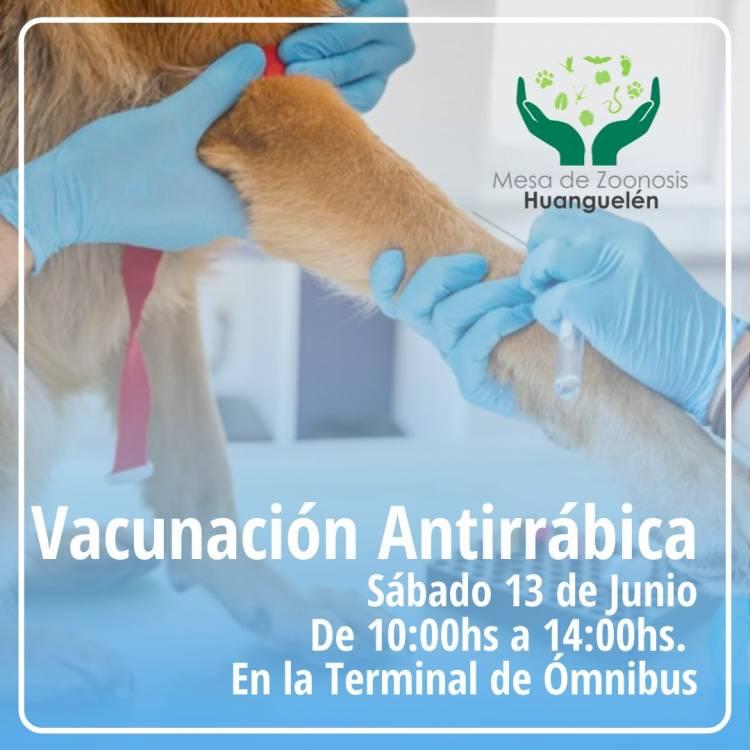 Vacunación antirrábica gratuita en Huanguelén