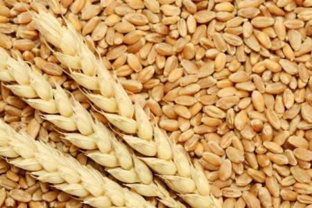 Mercado de granos