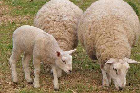 Licitación de lana en Centro de acopio de Coronel Pringles