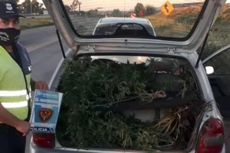 Un policía uniformado llevaba 8 kilos de plantas de marihuana en un auto