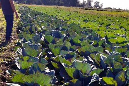 Ordenanza de Aplicación de Agroquímicos: se trabaja con productores de hortalizas sobre los alcances de la normativa
