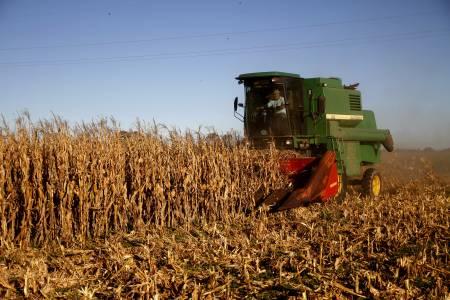Buenos Aires creció un 17% en exportaciones de cereales durante el 2018